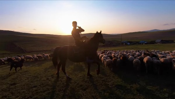 Гарет пасёт стадо